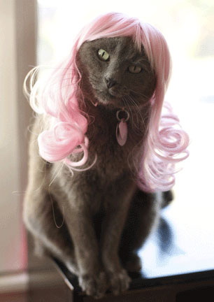 2315 - cat cute ilolled wig.jpg